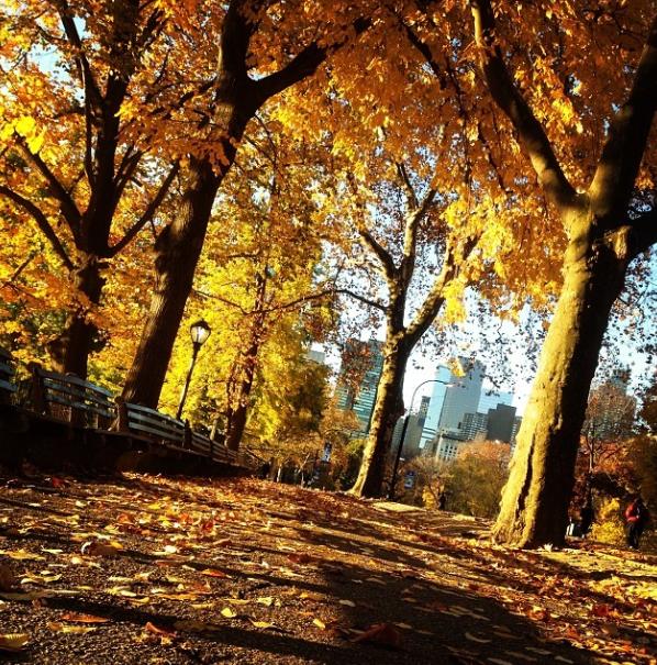 Screen Shot 2013-11-11 at 9.47.08 AM